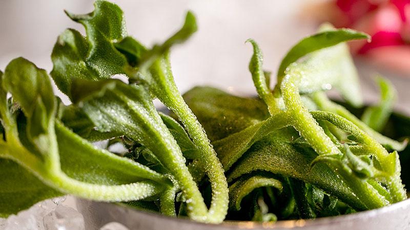 季節野菜13~20種類前後、ドレッシング4~5種をご用意