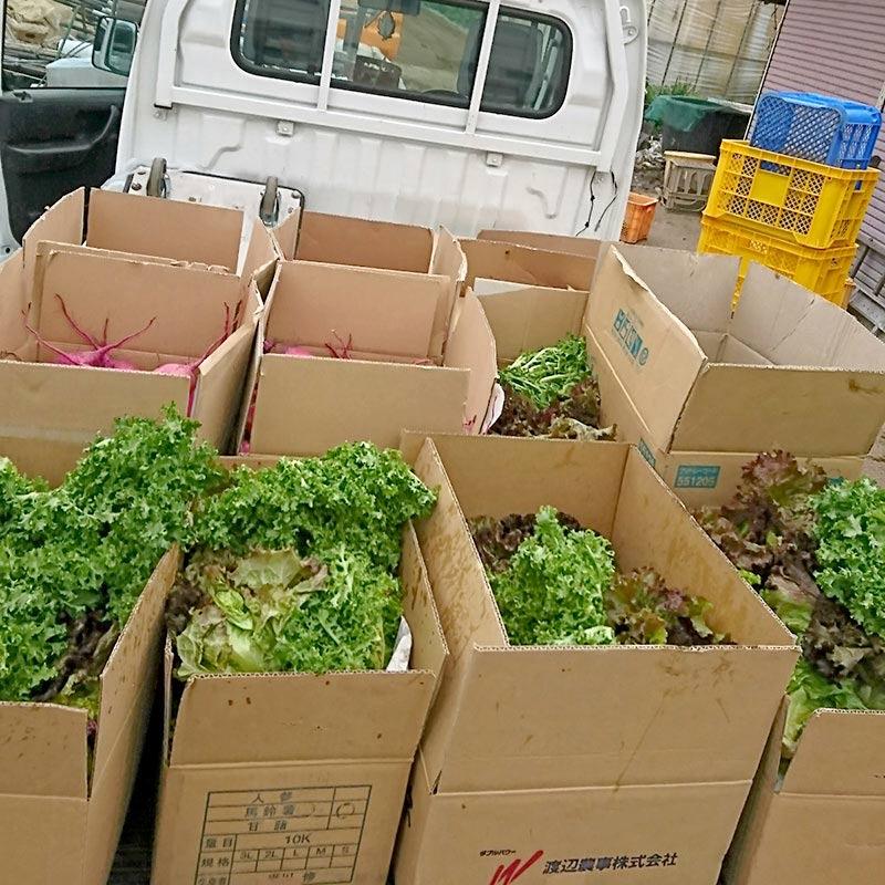 収穫した有機野菜