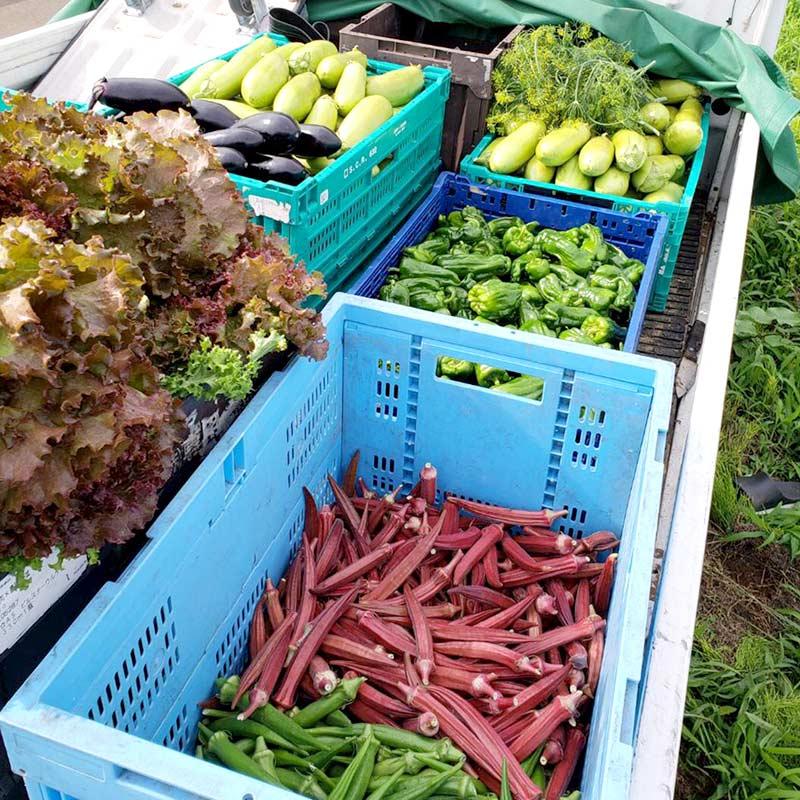 夏野菜は彩り豊かで、みずみずしくジューシー