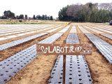 自社農園「LABOT農園」スタート!安全・健康な有機野菜を朝採れ新鮮なまま当店に